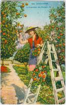 """""""Cote d'Azur - La Couillette des Oranges"""". Regionaltypische Arbeitskleidung von Erntehelferinnen um Menton. Photochromdruck 9 x 14 cm; Impressum: Edit(ion). d'Art Rostan & Munier, 19 - rue Marceau, Nice (Nizza) um 1920.  Inv.-Nr. vu914pcd00059"""