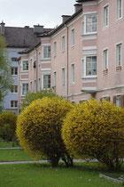 Vorgärten mit Ziersträuchern der kommunalen Wohnanlage, Prinz-Eugen-Straße Nr. 78 bis 84 im Pradler Saggen der Reichenau, Stadtgemeinde Innsbruck. Digitalphoto; © Johann G. Mairhofer 2011.  Inv.-Nr. 1DSC02975