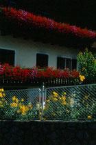 Geranien und Gartenblumen beim Pfarrwirt in Niederolang. Farbdiapositiv 24x36mm; © Johann G. Mairhofer.  Inv.-Nr. dc135kn0239.02_02