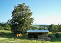 abri chevaux avec un box intégré