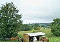 préparation des chevaux pour le départ