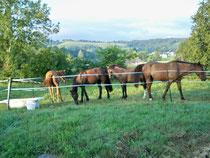 chevaux sous l'oeil des cavaliers