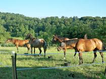chevaux sous les ordres
