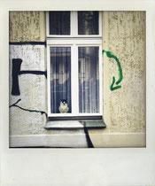 Muschi im Fenster