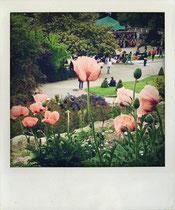 Blumen Paris