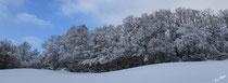 Orée du bois sous la neige