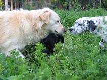 Nuka (7 Jahre)und Romi(6Jahre) sind dicke Freundinnen