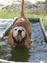 Bayard wurde von Tierschützern völlig verwahrlost aus dem Tierknast befreit