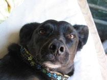 Mimma,11-12 Jahre, kam zur Leishmaniosekur und blieb wegen ihrer psychischen Schwierigkeiten.Heute ist sie ein sehr entspannter Hund