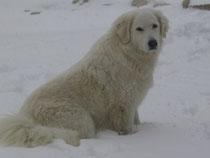 Ida findet Schnee natürlich toll!