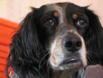 Miou,6 Jahre, lebte wegen Mobbing allein in einem Zwinger, fast blind und mit starken Schmerzen.Sie bekam eine Hüftprothese und kommt heute in ihr bekannter Umgebung mit der starken Sehbehinderung gut zurecht.