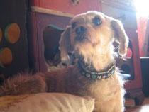 Die stille OmaLilly,17 Jahre, kam 14jährig zu uns für ihre letzten Monate.Doch Lilly überstand zweimal bösartige Tumore. Sie starb an ihrer dritten bösartigen Krebserkrankung.
