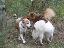 Fiammetta, Floh, Pauline