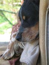 Elio, schön wie die Sonne....kam vor 2 Jahren. Elio überlebte Misshandlungen und ein Leben auf der Strasse nur mit größtem Misstrauen. Heute kann er endlich ein entspanntes Leben geniessen