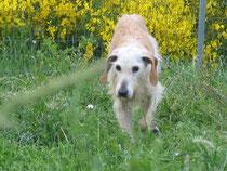 Gina konnte im Tierheim zuletzt nicht mehr allein aufstehen.....das hat sie in ihrem Garten schnell vergessen!