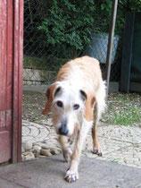 Gina, nach 16 Jahren im Tierheim schwer hospitalisiert, liebt ihren kleinen Garten und lecker Essen