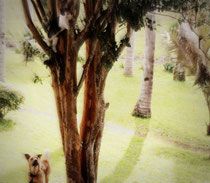 hund katze  2014
