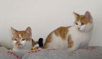 Wisky und Pingi