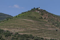 Weingut im Tal des Douro