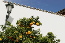 Reife Orangen in Ronda