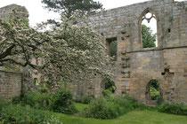 Jervaulx Abbey