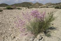 Wüste bei Tabernas