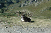 Aux alentours du Col de Pailhères, Sept. 2009