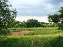 2003, ein nierschlagsarmer Sommer, der Teich war trocken gefallen