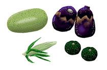 食品 食材 瓜 ナス トウモロコシ かぼちゃ 夏野菜