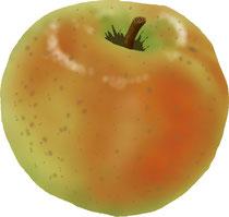 食品 食材 りんご
