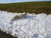 Noch ein bisschen Schnee gefunden!