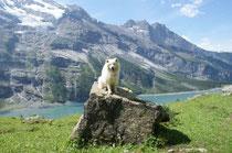 Schöner Hund gehört auf einen Thron!