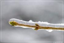 Der Frost hat alles im Griff