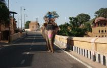 Elefanten auf den Straßen