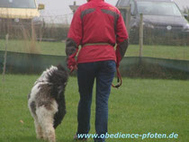 Lilly kam aus dem Tierschutz zu uns ins Training