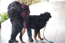 Der Hund muß sich von seinem Besitzer überall anfassen lassen...
