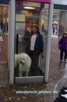Herausforderung Telefonzelle : Platzangst - großes Vertrauen des Hundes in den Besitzer ist hier gefragt. Ausprobieren!