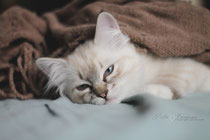 ragdoll female se*nameme leica