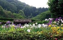 菖蒲園(しょうぶえん)