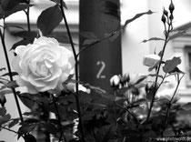 11 - Two  © www.photowords.de