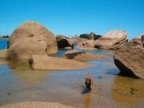 Sommerferien Frankreich, Bretagne 2003