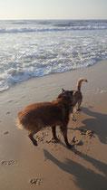 Urlaub 2013 Strandwanderung in Portugal