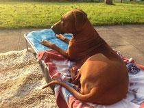 Rayha und ihr geliebter Liegestuhl ;-)