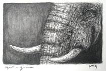 """""""Gentle Giant"""", Kohle und Graphit, 24 x 17 cm, 250 Euro"""