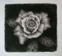 """Where the wild roses grow"", Kohle und Conte, 50 x 50 cm, 220 Euro"