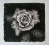 """""""Where the wild roses grow"""", Kohle und Conte, 50 x 50 cm, 220 Euro"""