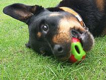 Die Erdbeere von Planet Dog: Ohne Vitamine, aber extrem spaßig