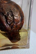 Christian Feig, Red cabbage like we love it! (Rotkohl, wie wir ihn lieben!), 2013, Eisen, Plastik & Wasser, 19,5 x 11,5 x 11,5 cm
