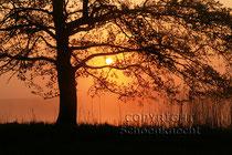 Morgensonne, Märkisch Oderland