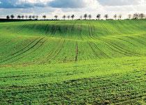 Grünes Feld bei Hohenstein, Märkisch Oderland